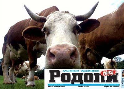 """""""Хайван акции"""" за огнеборци: Крава в река, заклещено животно между мантинели"""