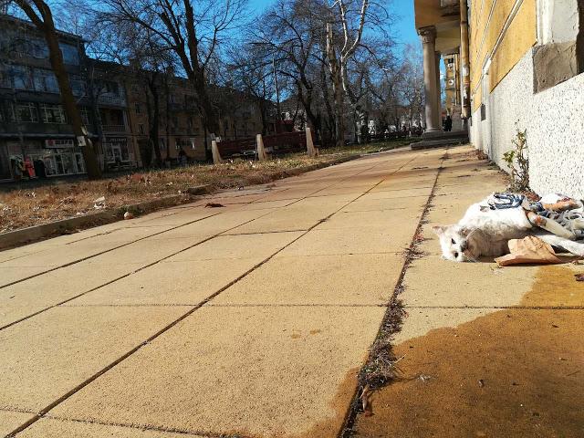 Читателят-репортер: От два дни труп на мъртво коте лежи на тротоара на най-оживеното място в Кърджали