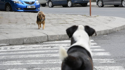 """Две ПТП: """"Мазерати"""" блъсна бездомно куче"""