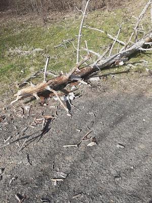 """Силният вятър събори дърво в """"Простор"""" на метри от минувачи"""