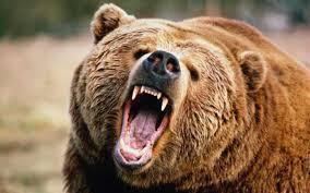 """19 сигнала """"Помощ, мечки!"""", един от тях от село в Ардинско!"""