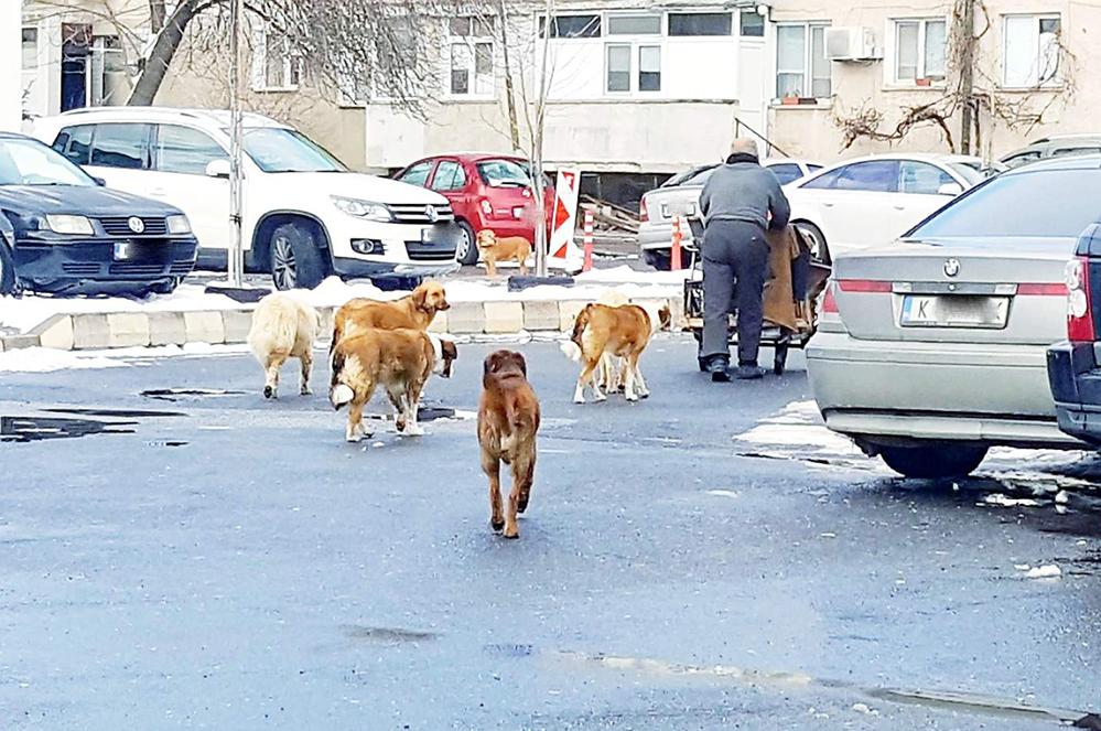 Германци ще ни спасяват от уличните кучета?!
