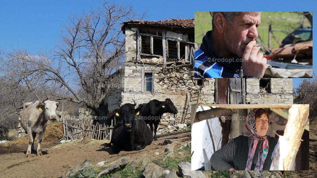 ВИДЕО репортаж: Лъвово: 4-ма души, 30 крави, а време за вируси… няма