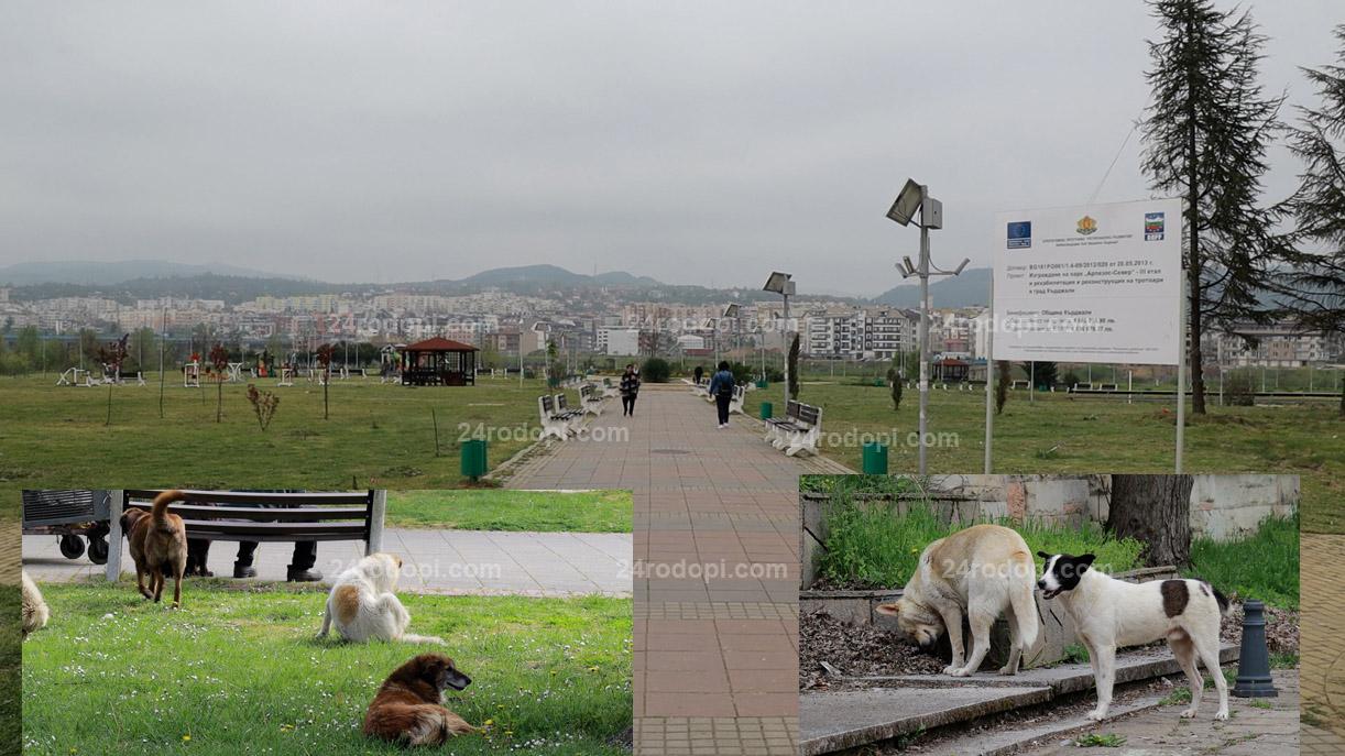 Хасан Азис към доброволците: Кажете как да намалим популацията на безстопанствените кучета!?