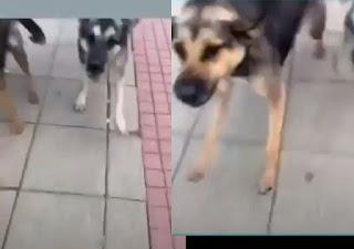 """Вижте как кучета нападнаха 10-токласник пред """"Пентагон""""-а (видео)"""