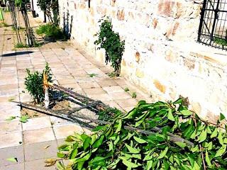 18-годишен унищожил дръвчетата в Джебел!