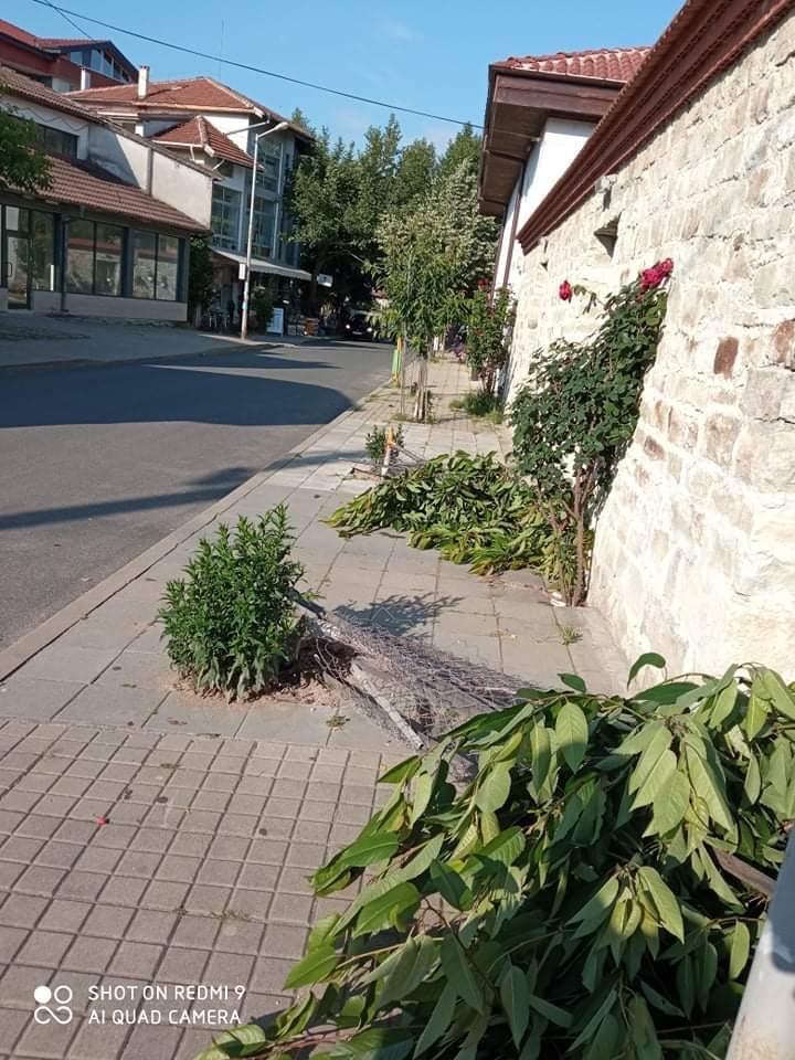 Издирват кой счупи дръвчетата в Джебел