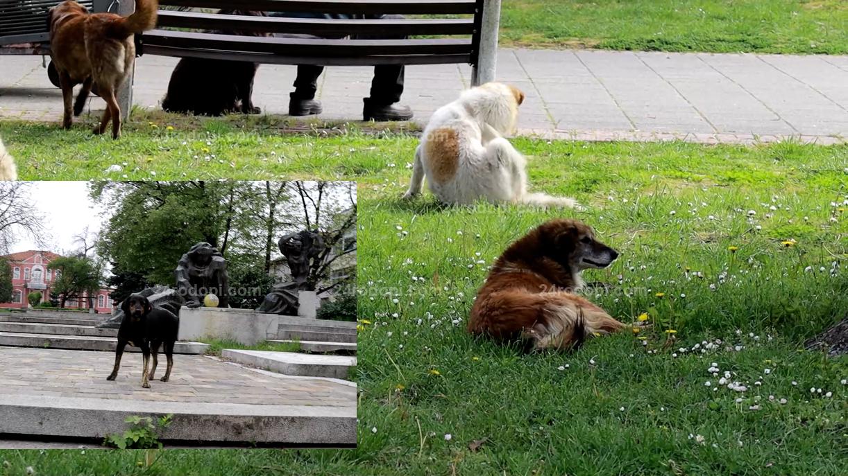 ВИДЕО репортаж: 60 нахапани от кучета за 5 месеца!