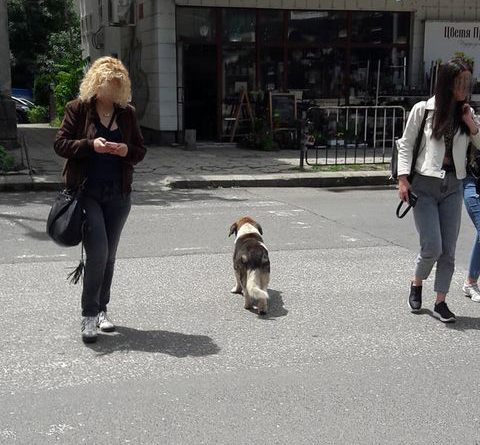 """Когато """"Зебра""""-та """"остарява"""", но и хора, и кучето си знаят!"""