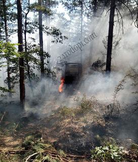 Огнеборци спасиха 50 дка гора!