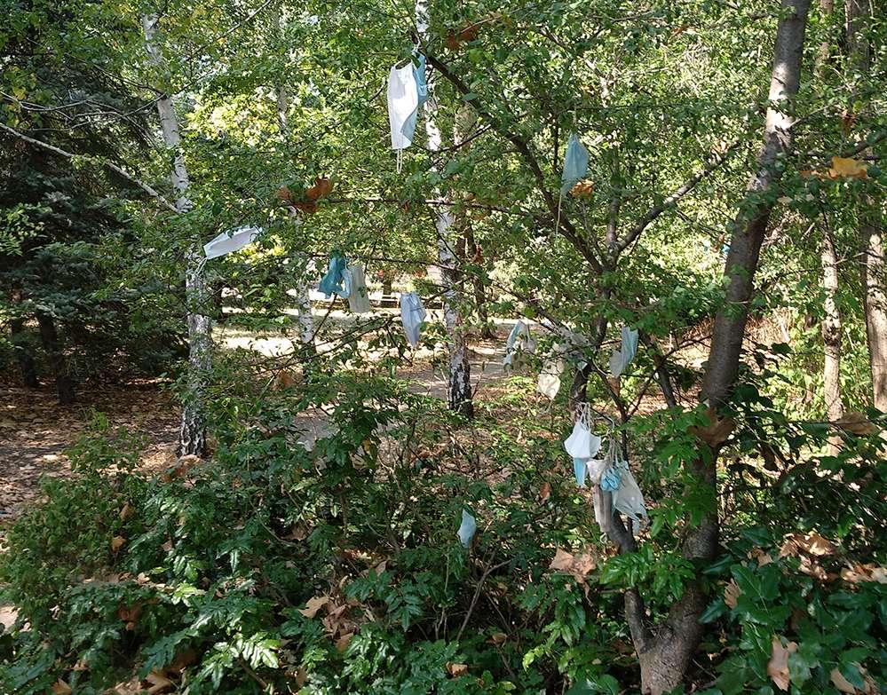 """Дърво ражда маски или страшният """"вирус"""" в двора на болницата"""
