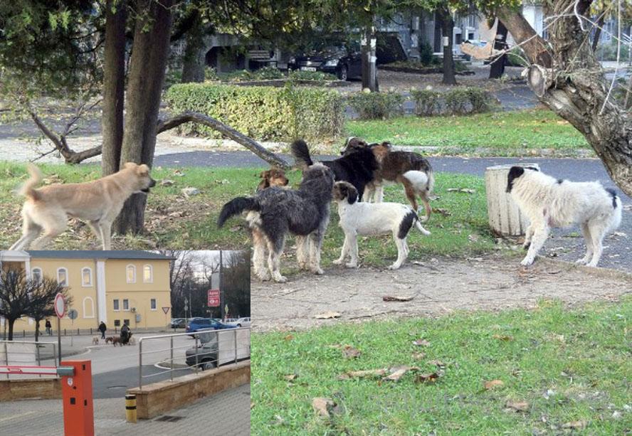 Ужас без край! Кучета нападнаха майка с две деца в центъра!