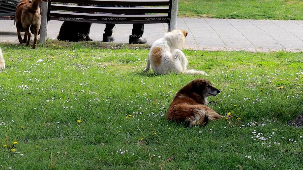 ВИДЕО репортаж: Кошмар! 130 нахапани от кучета в Кърджали за 7 месеца!