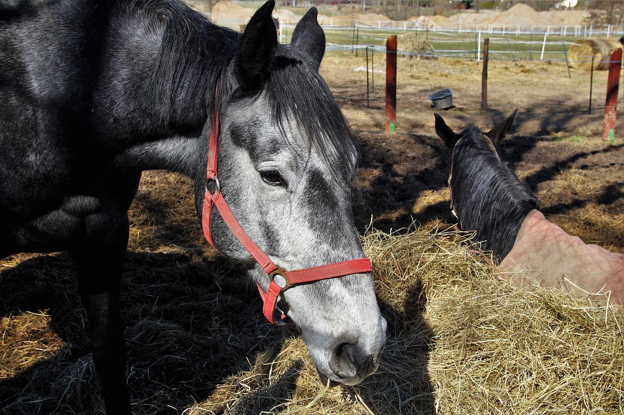 """24-те часа на BG: Уморените коне не искат избори, а """"редовно"""" разпределение на порциите"""