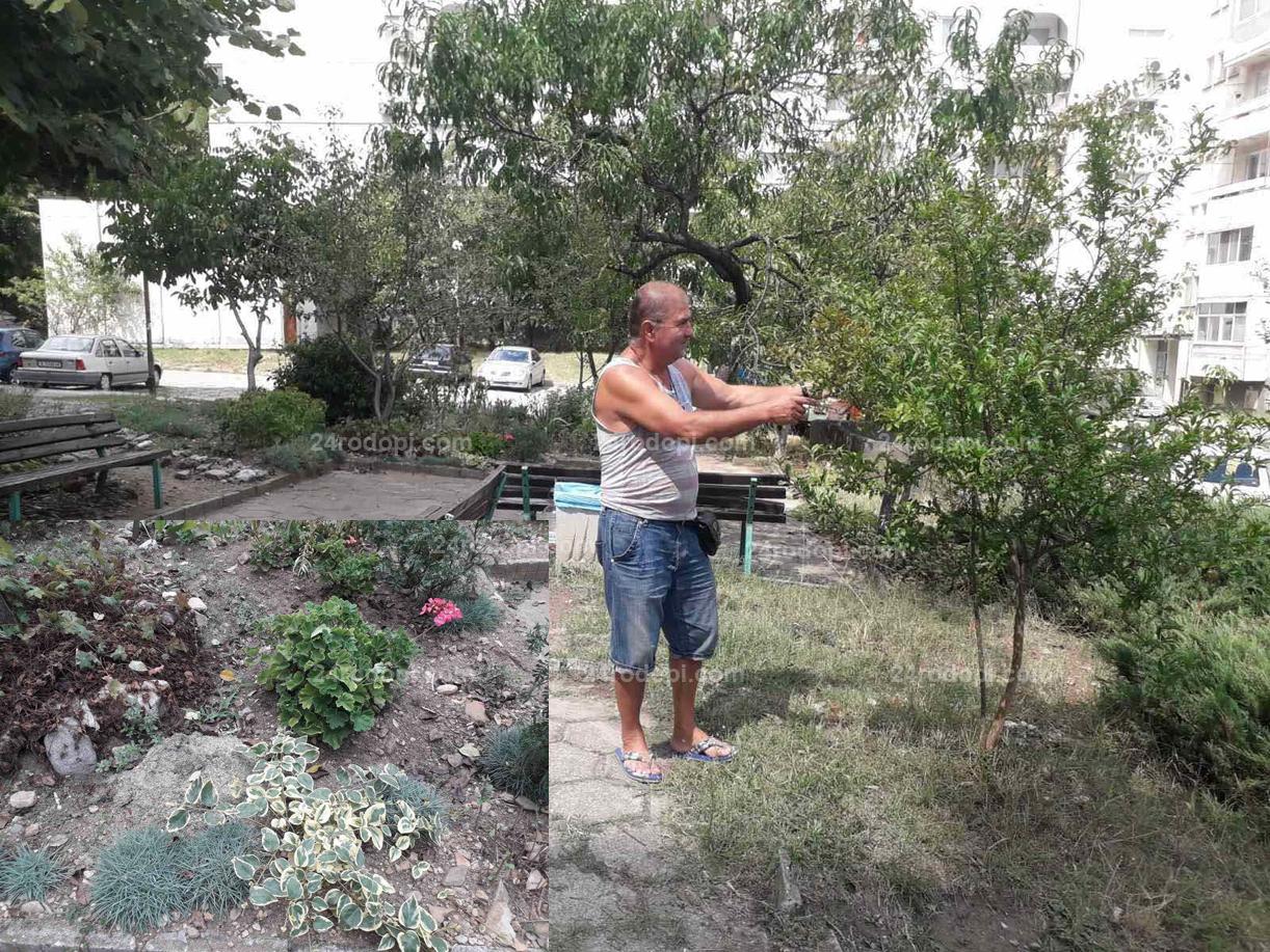 """Неджо: Билките и подправките си ги бера от градинката пред блока във """"Възрожденци""""! (снимки)"""