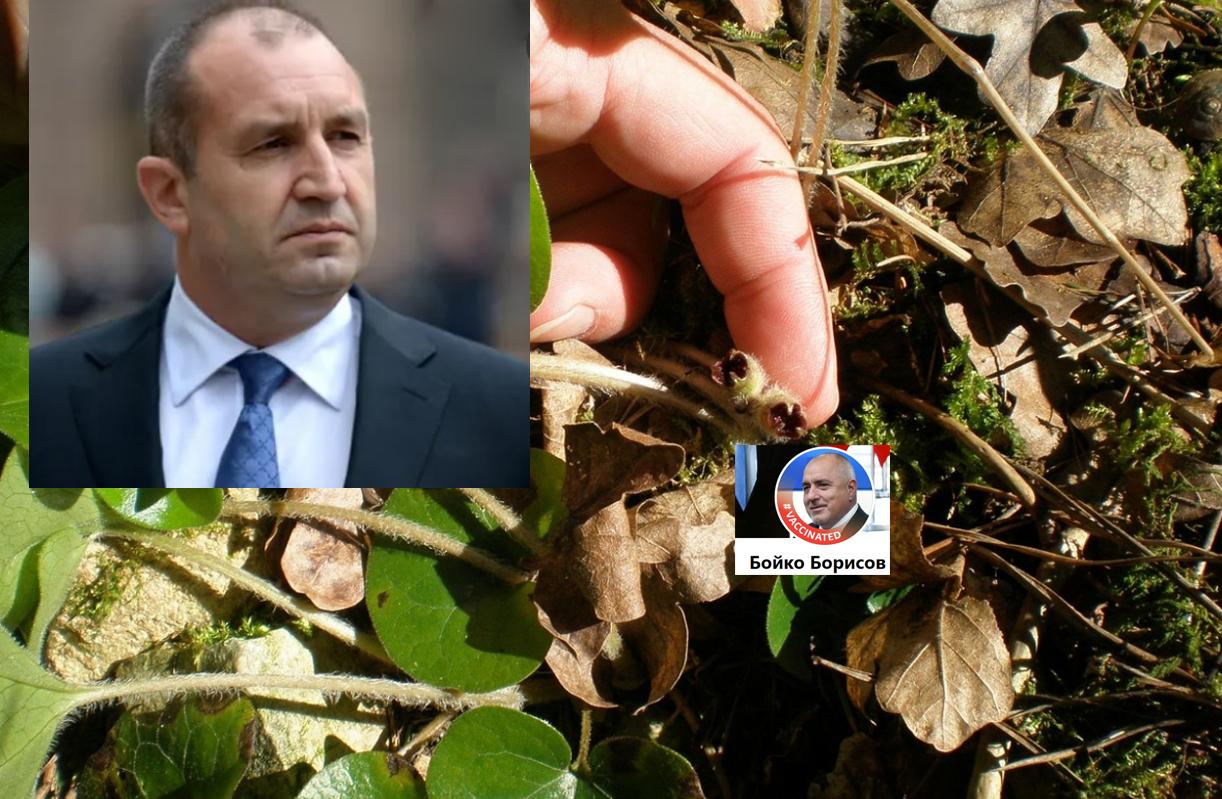 Защо за президента Радев Бойко Борисов вече е Османоктайът на ГЕРБ!?