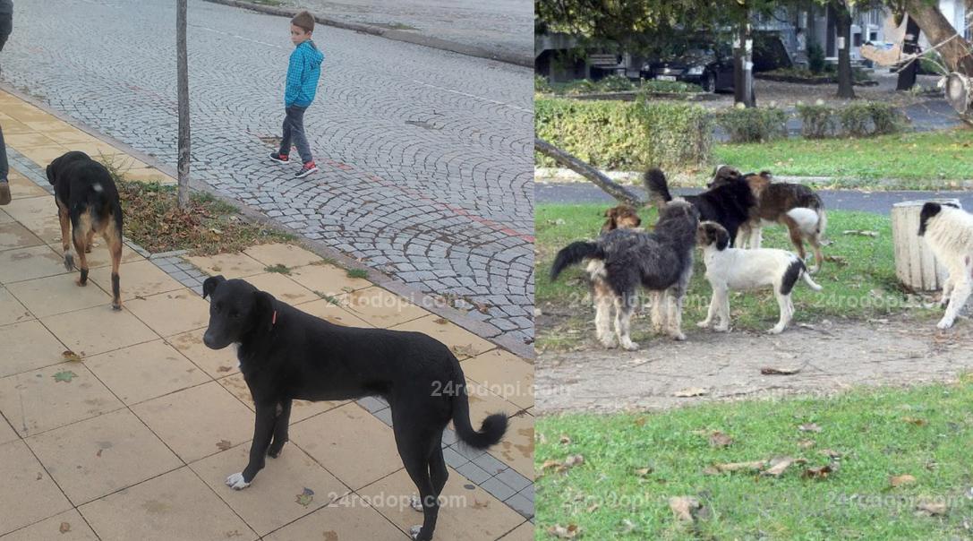 """""""Уличните кучета"""" влизат в Общината, кмет и шеф на дирекция търсят решение"""