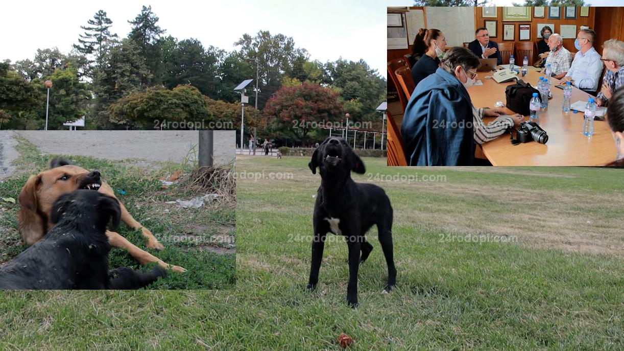 ВИДЕО репортаж: 130 нахапани, спешен приют, а за защитничка кучетата са агресивни в… кавички!