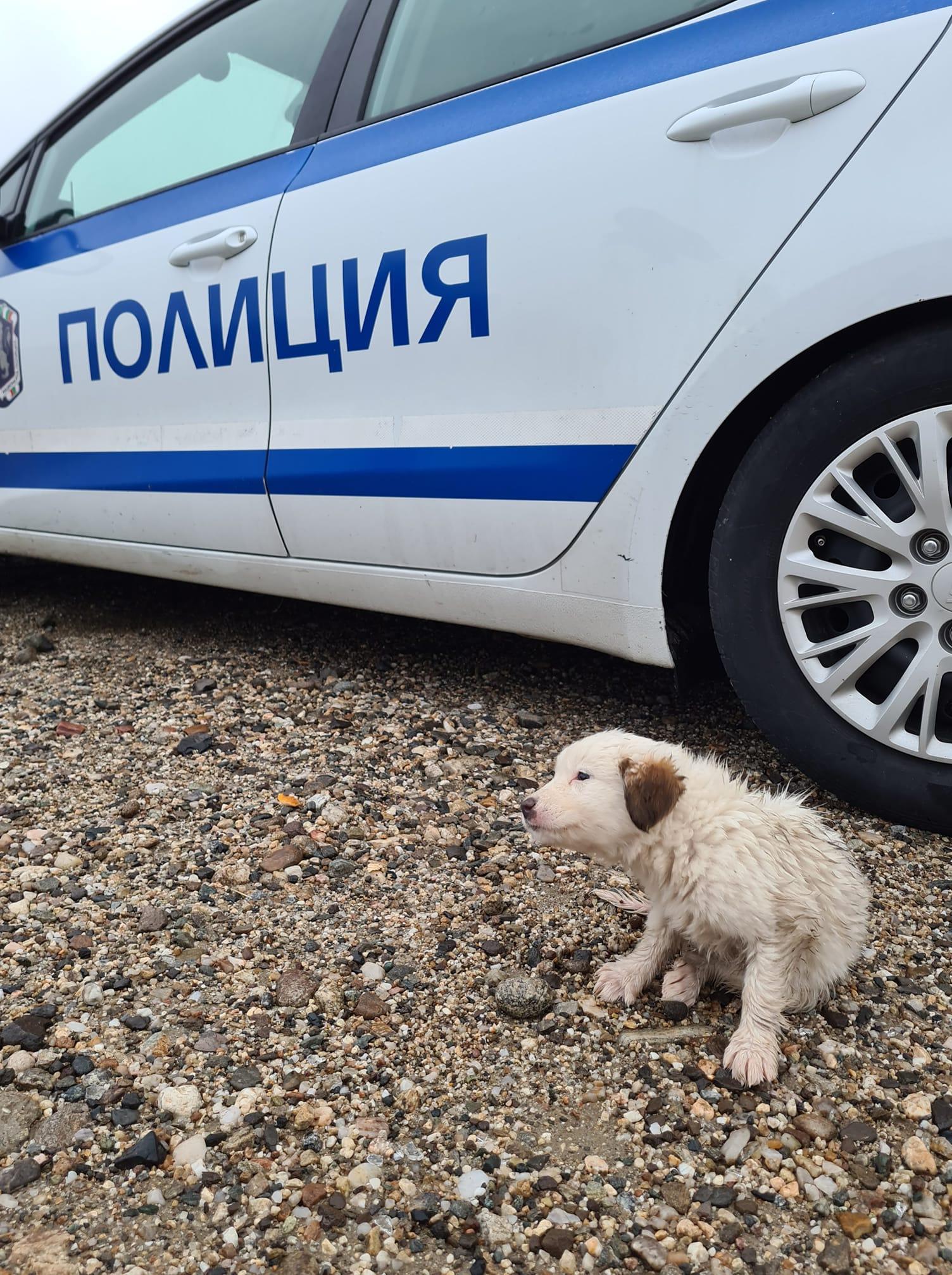 Полицаи спасиха кученце на пътя за Маказа
